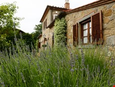 Photo 2 of Rustic Cortona Countryside Villa and Cottage with Views, Pool, Near Town, Restaurants, and Train Station